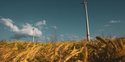 Wind turbines above a wheat field